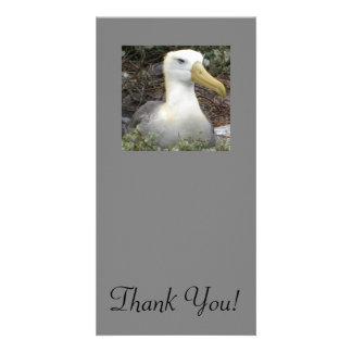 Close Shot Of Albatross With Graceful Head Card