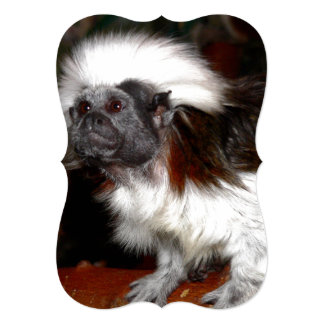 Close Shot of Brown And White Tamarin Card