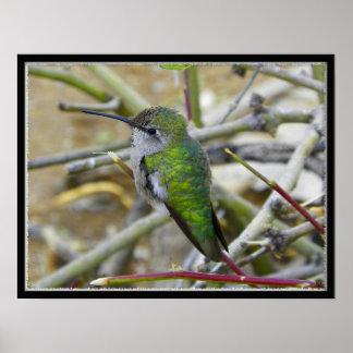 close shot of hummingbird poster