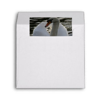 Close Shot Of Mute Swan With Dramatic Wings Envelope