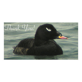 Close Shot Of Velvet Scoter Swimming Card