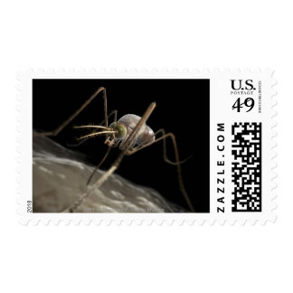 Close up 3d mosquito biting postage stamp