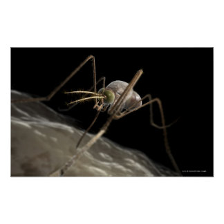 Close up 3d mosquito biting poster