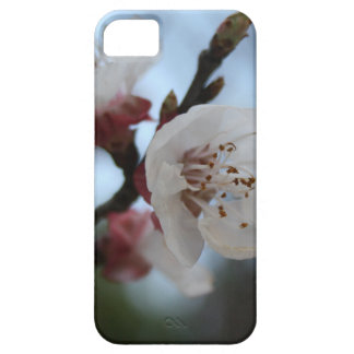 Close Up Apricot Blossom In Pastel Shades iPhone 5 Case
