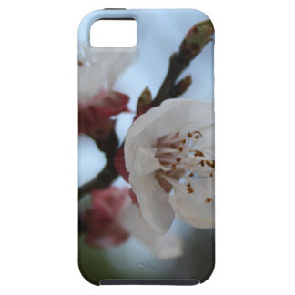 Close Up Apricot Blossom In Pastel Shades iPhone 5 Covers