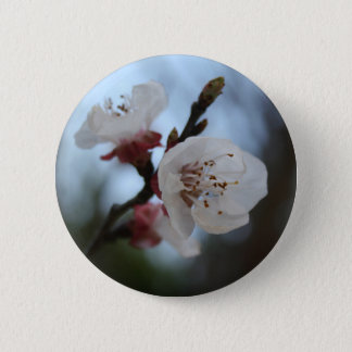 Close Up Apricot Blossom In Pastel Shades Pinback Button