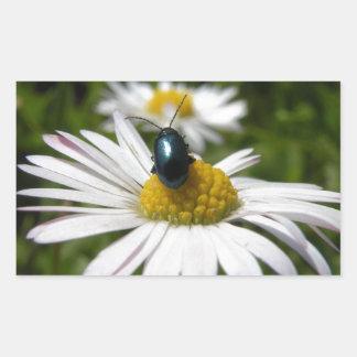 Close-up Beetle sitting on Daisy Photo Rectangular Sticker