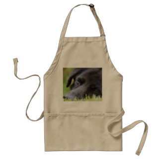 Close Up Black old dogs face with selective focus Adult Apron