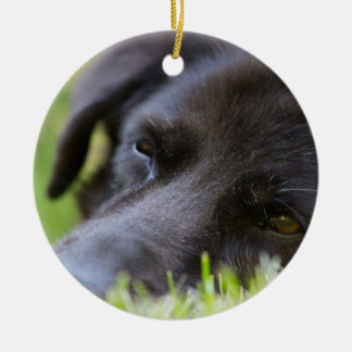 Close Up Black old dogs face with selective focus Ceramic Ornament
