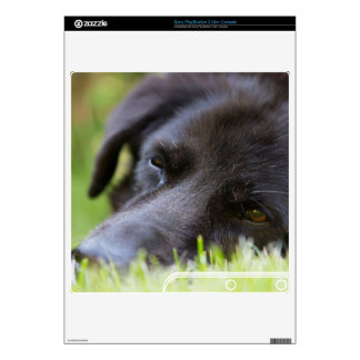 Close Up Black old dogs face with selective focus Decals For The PS3 Slim