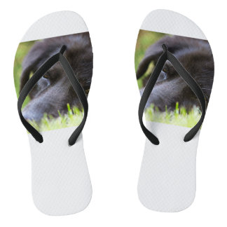 Close Up Black old dogs face with selective focus Flip Flops