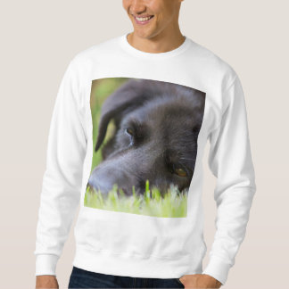 Close Up Black old dogs face with selective focus Sweatshirt