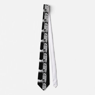 Close-up Black White Horse in Night Neck Tie