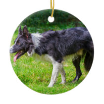 Close up border collie dog walks in grass.JPG Ceramic Ornament