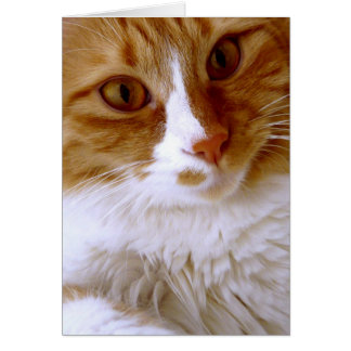 Close Up Cat Blank Note Card