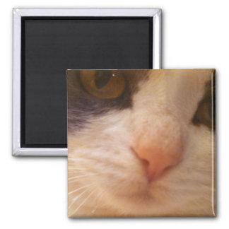 Close Up Cat Magnet
