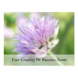 Close Up - Chive Flower Postcard