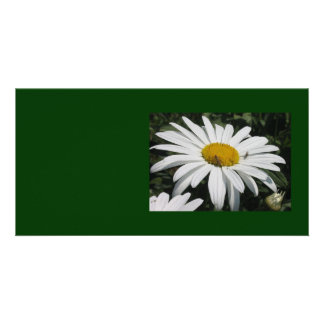 Close Up Common Daisy with Winged Insects Card