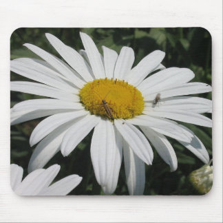 Close Up Common Daisy with Winged Insects Mouse Pad
