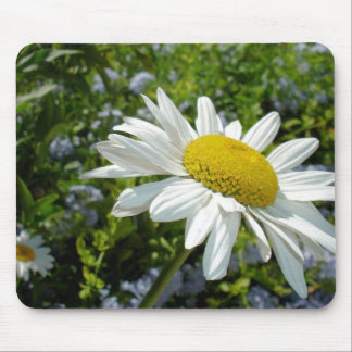 Close Up Common White Daisy With Garden Mouse Pad