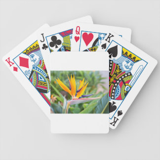 Close up Crane flower or Strelitzia reginaei Bicycle Playing Cards