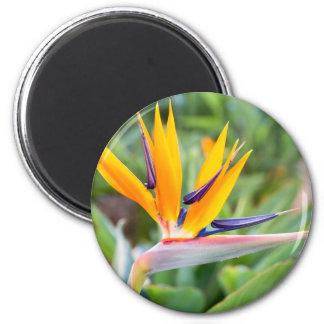 Close up Crane flower or Strelitzia reginaei Magnet