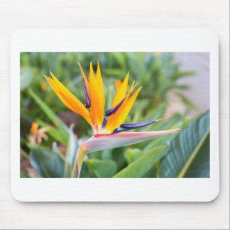 Close up Crane flower or Strelitzia reginaei Mouse Pad