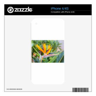 Close up Crane flower or Strelitzia reginaei Skins For The iPhone 4