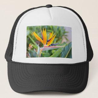 Close up Crane flower or Strelitzia reginaei Trucker Hat