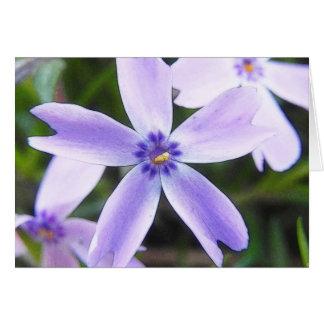 Close-Up Creeping Phlox Flower Cards