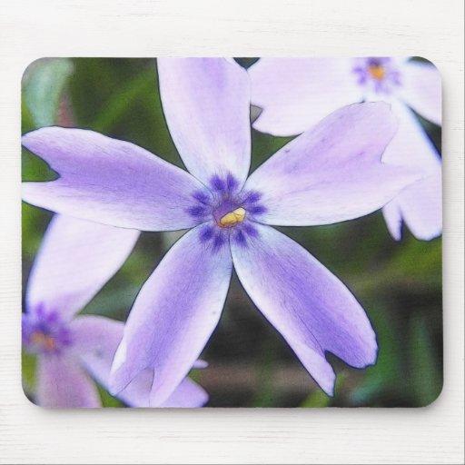 Close-Up Creeping Phlox Flower Mousepads