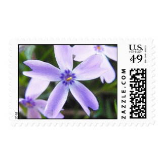 Close-Up Creeping Phlox Flower Postage Stamps