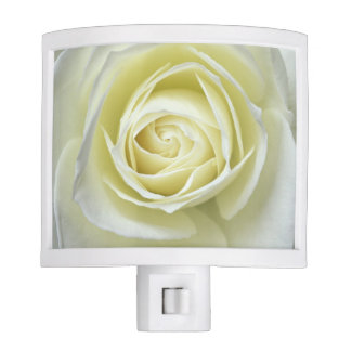 Close up details of white rose night lights