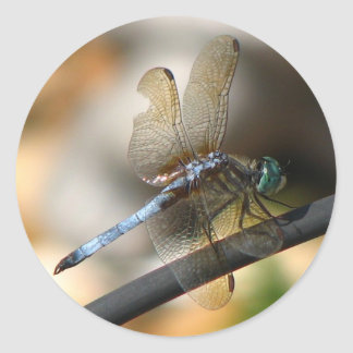 Close up Dragonfly Stickers
