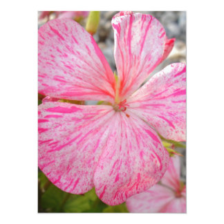 """Close Up Flower of Begonia 5.5"""" X 7.5"""" Invitation Card"""