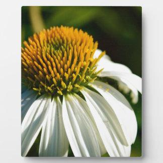 Close-up Flower Plaque