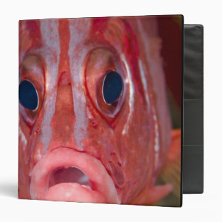 Close-up frontal view of colorful squirrelfish binder