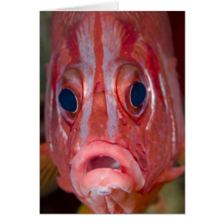 Close-up frontal view of colorful squirrelfish card