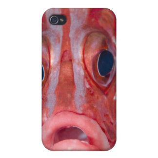 Close-up frontal view of colorful squirrelfish iPhone 4/4S cover