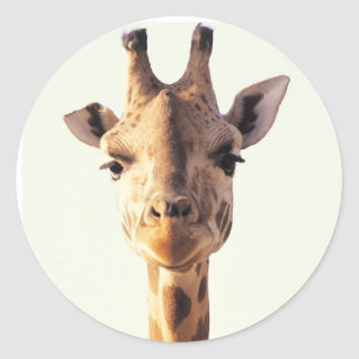 Close-Up Giraffe Classic Round Sticker