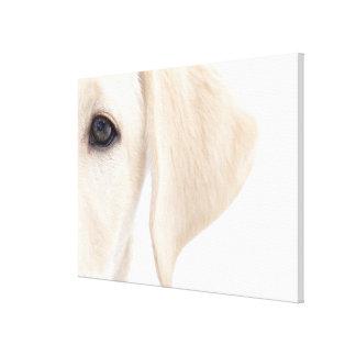 Close-up Half Face of Yellow Labrador Canvas Print