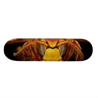 Close Up Head of the European Hornet Vespa Crabro Skateboard Deck