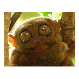 Close-Up Headshot of Adorable Soft Tarsier Postcard