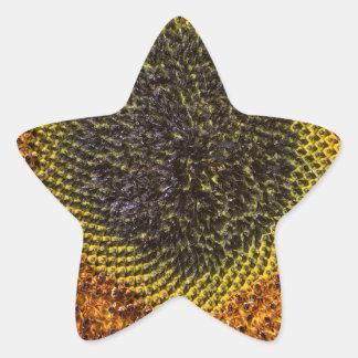 Close up heart of sunflower star sticker