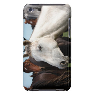 Close-up herd of horses. iPod Case-Mate cases