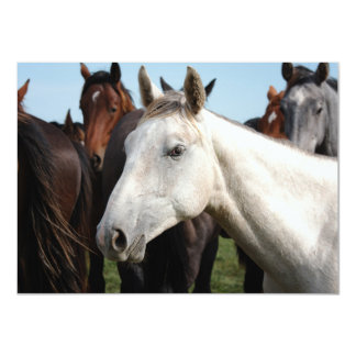 "Close-up herd of horses. 4.5"" x 6.25"" invitation card"