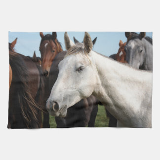 Close-up herd of horses. kitchen towels