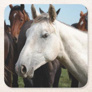 Close-up herd of horses. square paper coaster