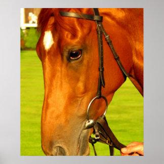 Close up horse portrait Poster