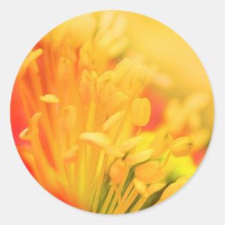 Close Up - Iceland Poppy Classic Round Sticker
